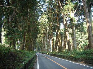 例幣使街道の杉並木